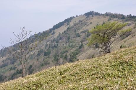 大菩薩嶺 笹原の高山の写真素材 [FYI02979826]