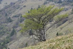 大菩薩嶺の写真素材 [FYI02979827]