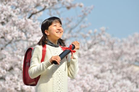 小学生の女の子(桜、ランドセル、卒業証書)の写真素材 [FYI02979842]