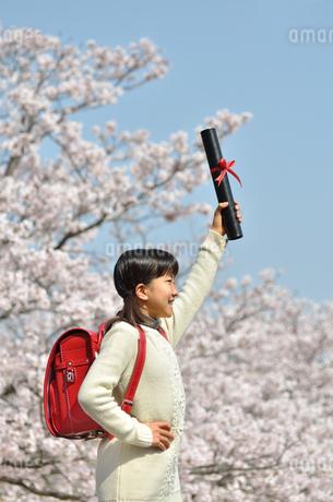 小学生の女の子(桜、ランドセル、卒業証書)の写真素材 [FYI02979848]
