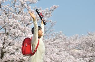 小学生の女の子(桜、ランドセル、卒業証書)の写真素材 [FYI02979850]