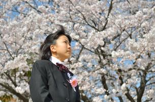 中学一年生の女の子(入学、桜)の写真素材 [FYI02979865]