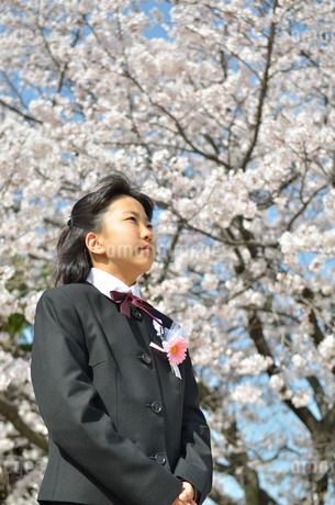 中学一年生の女の子(入学、桜)の写真素材 [FYI02979866]