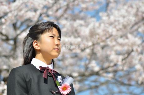 中学一年生の女の子(入学、桜)の写真素材 [FYI02979867]