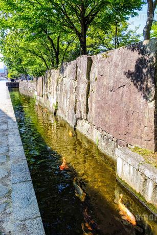 飛騨古川、石垣脇の瀬戸川を泳ぐ錦鯉の写真素材 [FYI02979871]