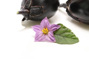 ナスビとナスビの花の写真素材 [FYI02979893]