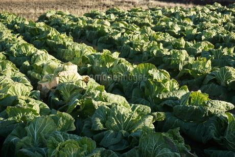 畑の写真素材 [FYI02980000]