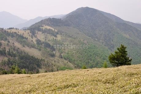 笹原の高地の写真素材 [FYI02980097]