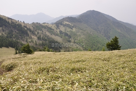 笹原の高地の写真素材 [FYI02980099]