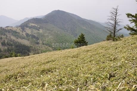 笹原の高地の写真素材 [FYI02980102]