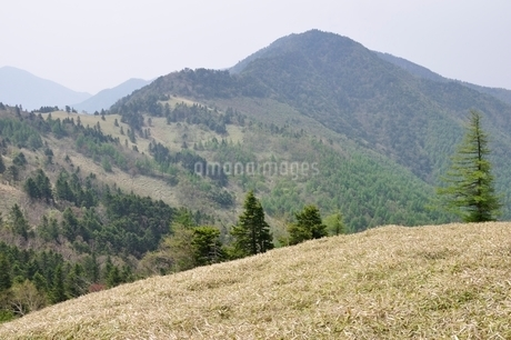 笹原の高地の写真素材 [FYI02980112]