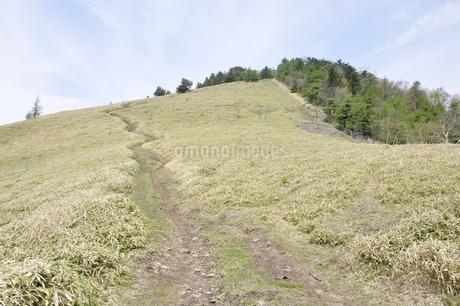 笹原に続く道の写真素材 [FYI02980124]