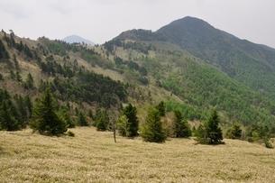 笹原の石丸峠より小金沢山の写真素材 [FYI02980143]
