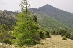 笹原の石丸峠より小金沢山の写真素材 [FYI02980145]