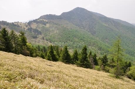 笹原の石丸峠より小金沢山の写真素材 [FYI02980147]