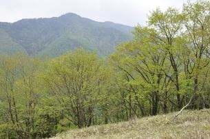 熊沢山より小金沢山の写真素材 [FYI02980221]