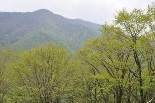 熊沢山より小金沢山の写真素材 [FYI02980223]