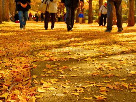 一面のイチョウの落ち葉と人々の写真素材 [FYI02980252]