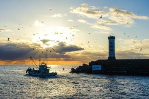 カモメが乱舞する日の出頃の小田原港の写真素材 [FYI02980282]