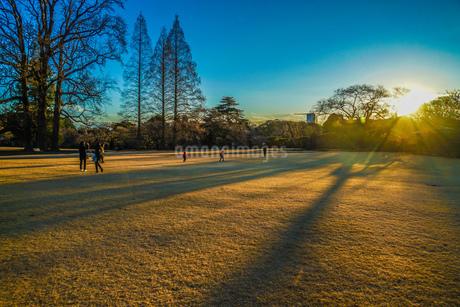夕暮れと木のシルエットの写真素材 [FYI02980459]