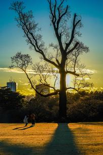 夕暮れと木のシルエットの写真素材 [FYI02980460]