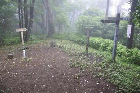今倉山の山頂の写真素材 [FYI02981111]