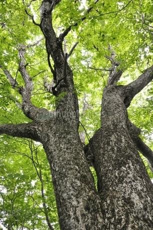 森の木の写真素材 [FYI02981118]