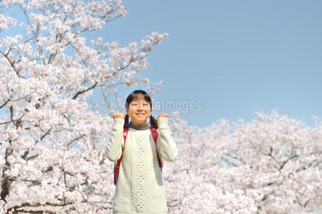 青空で笑う小学生の女の子(桜、ランドセル)の写真素材 [FYI02981249]
