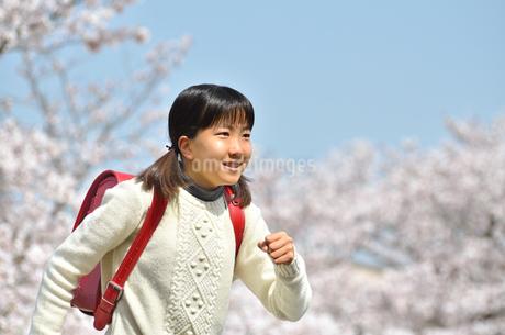 青空で笑う小学生の女の子(桜、ランドセル)の写真素材 [FYI02981251]