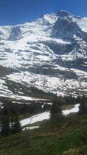 スイス ユングフラウ地方 クライネシャイディック~ヴェンゲンアルプ ハイキングコース 15の写真素材 [FYI02981297]