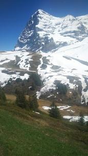 スイス ユングフラウ地方 クライネシャイディック~ヴェンゲンアルプ ハイキングコース 17の写真素材 [FYI02981299]