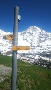 スイス ユングフラウ地方 クライネシャイディック~ヴェンゲンアルプ ハイキングコース 30の写真素材 [FYI02981317]