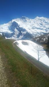 スイス ユングフラウ地方 クライネシャイディック~ヴェンゲンアルプ ハイキングコース 32の写真素材 [FYI02981319]
