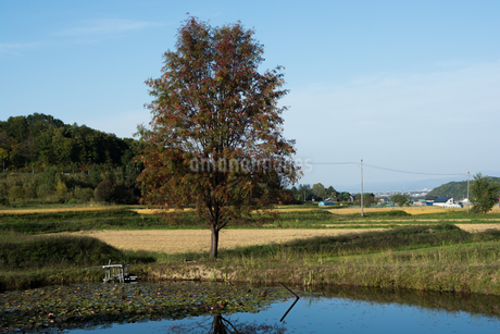 池の畔に立つナナカマドの写真素材 [FYI02981335]