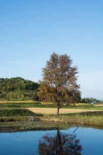 池の畔に立つナナカマドの写真素材 [FYI02981337]