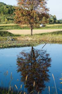 池の畔に立つナナカマドの写真素材 [FYI02981339]