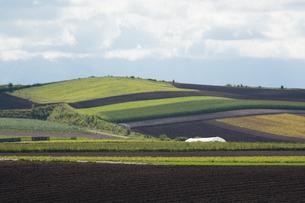 パッチワークのような畑作地帯の写真素材 [FYI02981342]