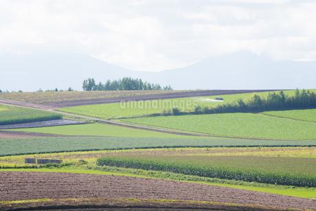 パッチワークのような畑作地帯の写真素材 [FYI02981343]