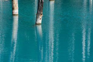 夏の青い池 美瑛町の写真素材 [FYI02981362]