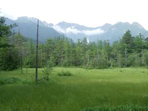 森林の写真素材 [FYI02981475]