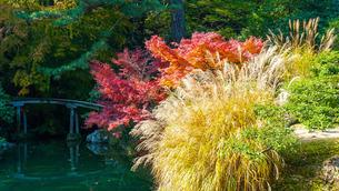 栗林公園の睡竜潭と慈航嶼あたりの紅葉 Suiryutan Pond and Jikosho Islandの写真素材 [FYI02981761]