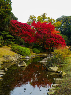 栗林公園の潺鍰池あたりの紅葉 Senkanchi Pond の写真素材 [FYI02981762]
