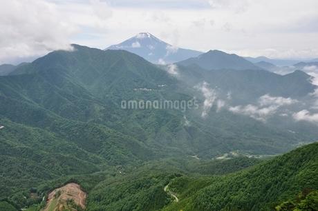 今倉山の松山から望む富士山の写真素材 [FYI02981771]