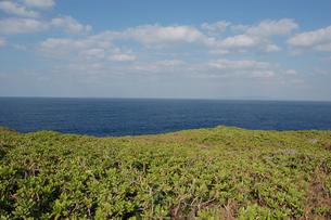 海岸沿いの緑の原っぱの写真素材 [FYI02981832]
