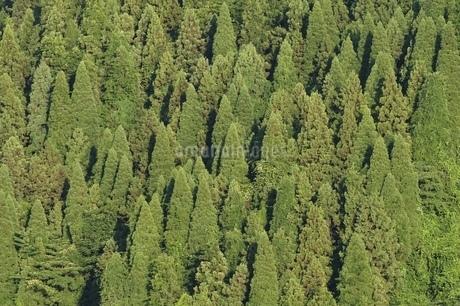 湖畔の樹林の写真素材 [FYI02981869]
