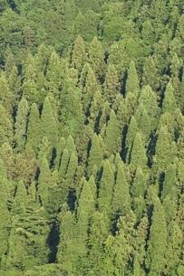 湖畔の樹林の写真素材 [FYI02981870]
