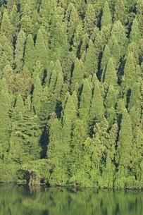 湖畔の樹林の写真素材 [FYI02981871]