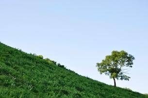 草原の風景の写真素材 [FYI02981875]