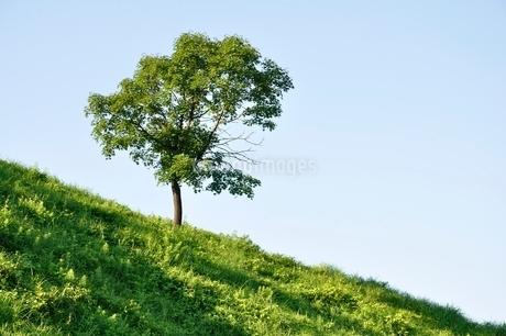 草原の風景の写真素材 [FYI02981893]