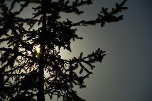 木のシルエットの写真素材 [FYI02981944]
